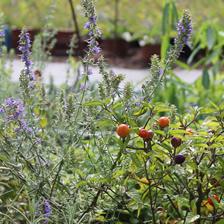 atelier_bons_plants_aromatique
