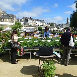 Atelier des Bons Plants caden producteur de plants et semences bio sur les marchés locaux du Morbihan