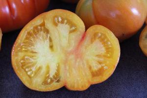 Tomate Bio Joyau d' Oaxaca