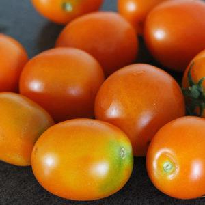 Tomate Bio Ida Gold