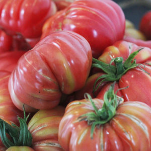 Tomate Bio Zapotec Pink