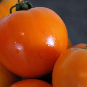 Tomate Bio Moon glow