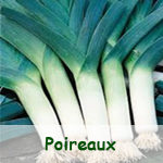 Poireaux