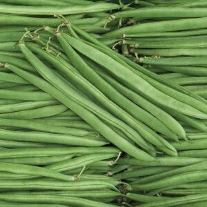 graines-haricot-marona-bio