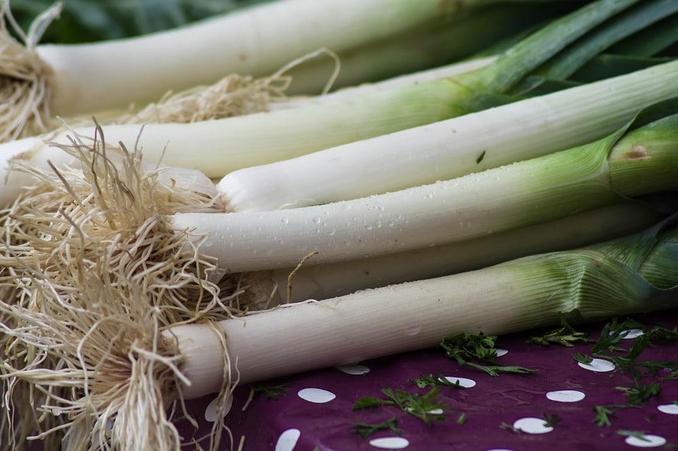 semence biologique Poireau G/éant DHiver Graines Bio