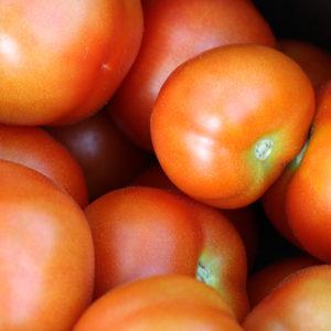 Tomate Karos Bio