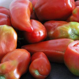 Tomate Cornue des Andes Bio