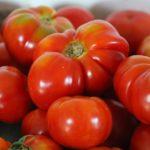Tomate Sasha Altaï Bio