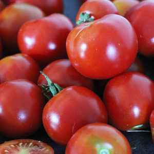 Tomate Précoce de Quimper Bio