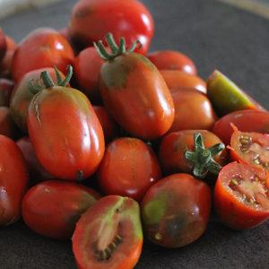 Tomate cerise Prune Noire Bio