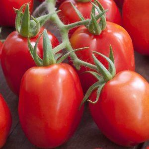 tomate-roma-bio
