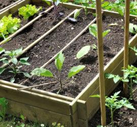 atelier-des-bons-plants-bio