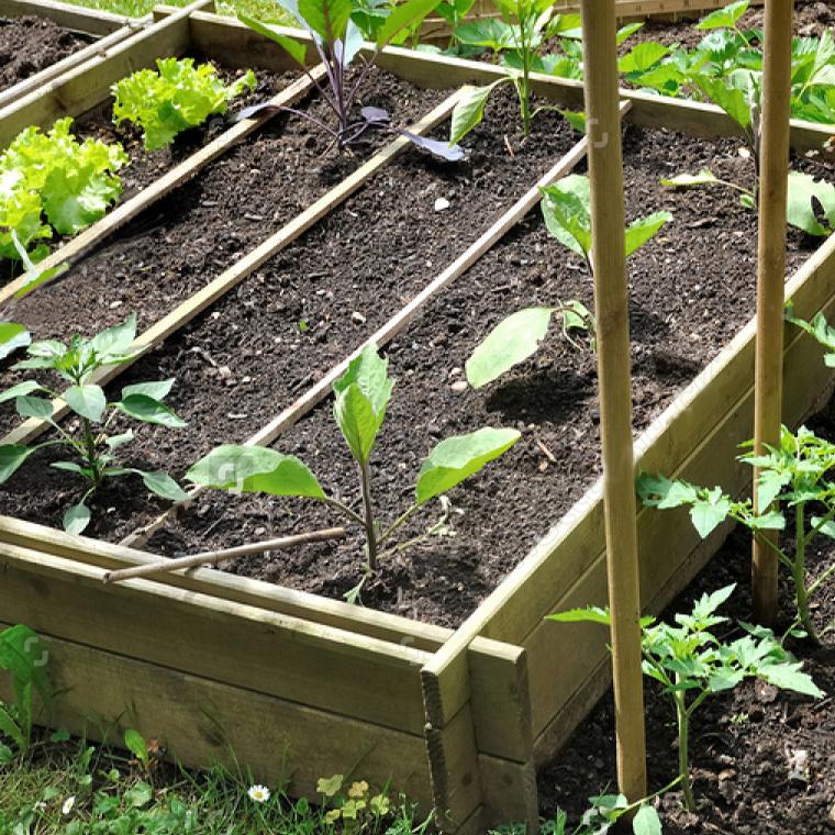 atelier des bons plants bio-réussir des semis bio