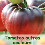 Tomates autres couleurs