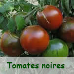 Tomates Noires
