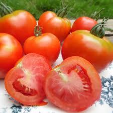 Tomate Montfavet Bio