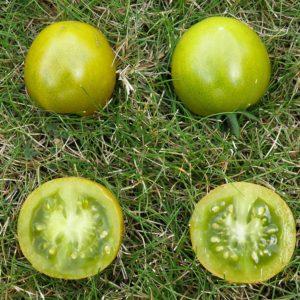 Tomate cerise Raisin Vert Bio