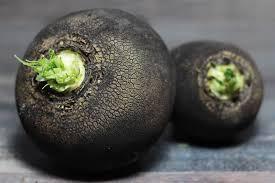 radis noir gros rond d'hiver bio