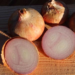 oignon-rose-roscoff-armorique-bio