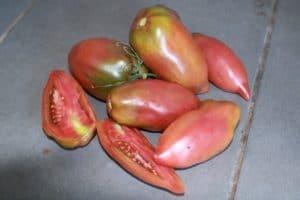 semences de tomates black cornue bio