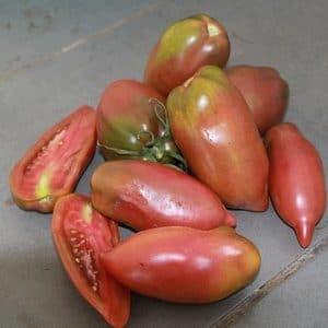 Graines de tomates black cornue bio