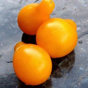 graines de tomate cerise jaune poire bio